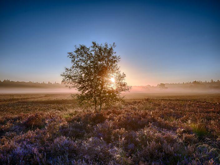 Heide (Moors)