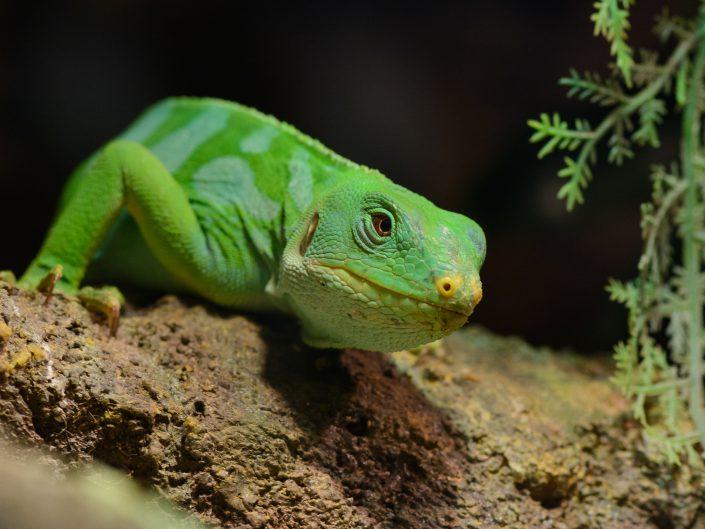 Reptiels & Amphibieën (Reptiles & Amphibians)